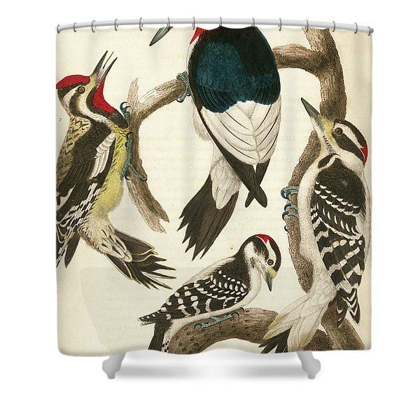 1. Red-headed Woodpecker. 2. Yellow-bellied Woodpecker. 3. Hairy Woodpecker. 4. Downy Woodpecker. Shower Curtain