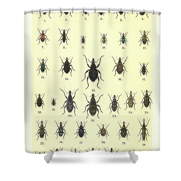 Illustration For The Young Beetle Collectors Handbook Shower Curtain