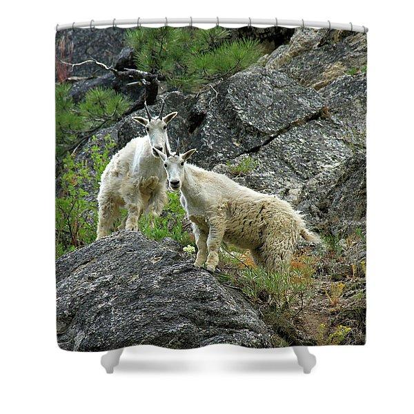 Idaho Mountain Goats Shower Curtain