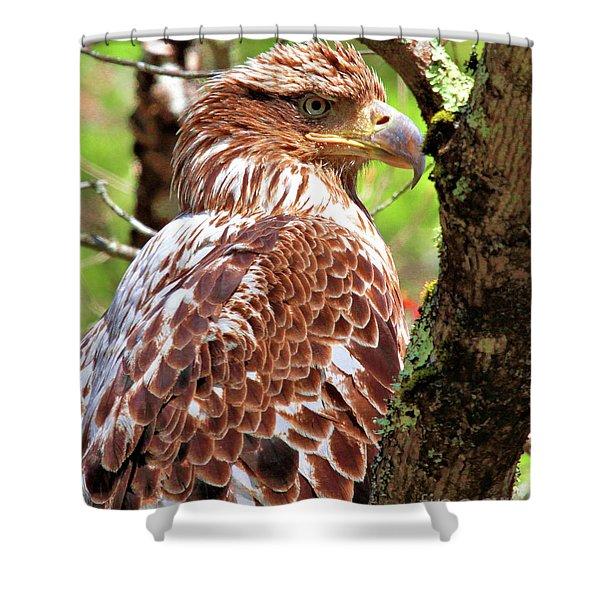 Immature Eagle Shower Curtain