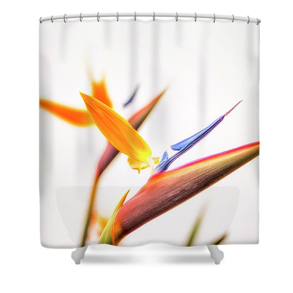 In Paradise's Glow Shower Curtain