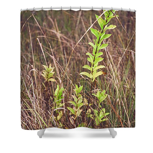 Shower Curtain featuring the photograph In Tall Grass by Whitney Goodey