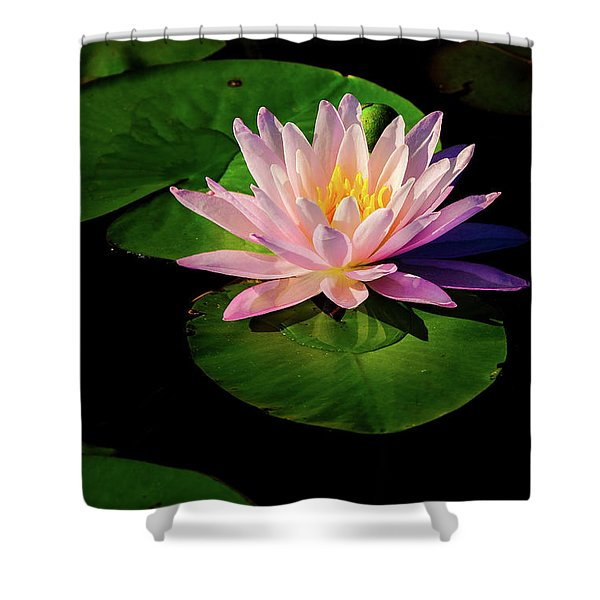 Shower Curtain featuring the photograph In The Spotlight by Jeff Sinon