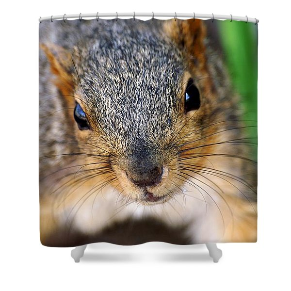 In Your Face Fox Squirrel Shower Curtain