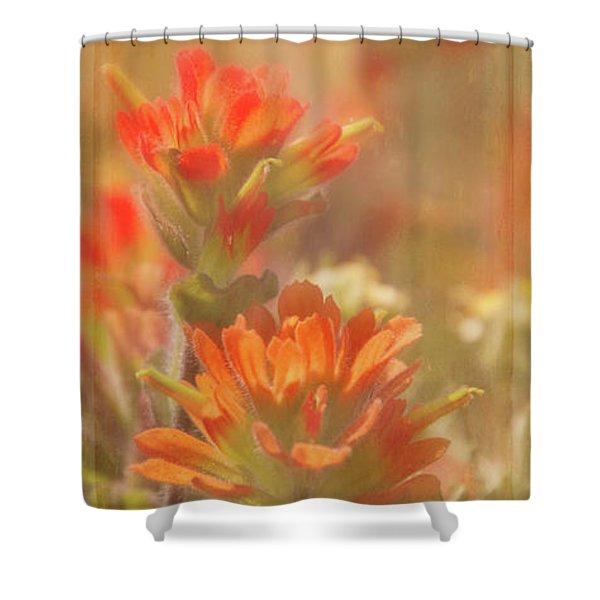 Indian Paintbrush 2 Shower Curtain