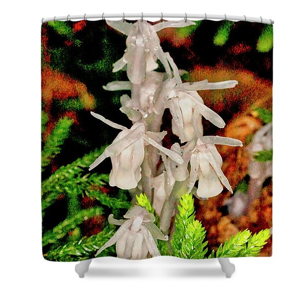 Shower Curtain featuring the photograph Indian Pipes On Club Moss by Meta Gatschenberger