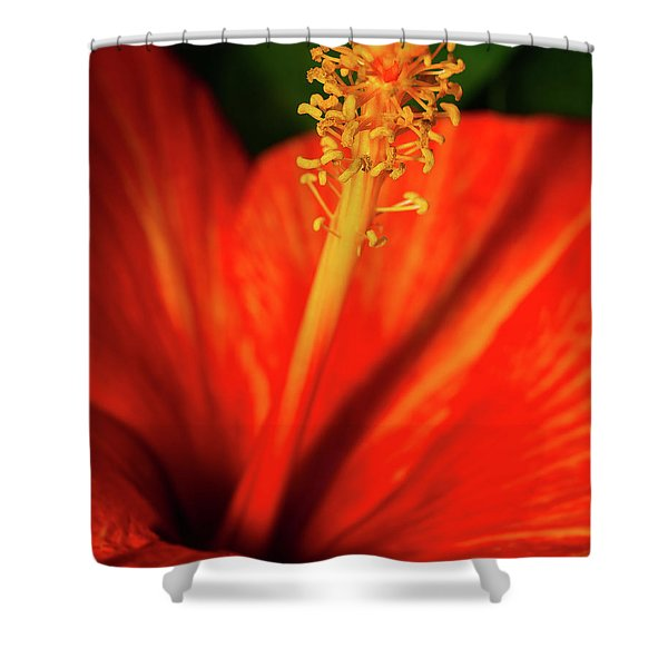 Into A Flower Shower Curtain