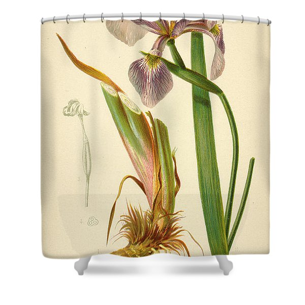Iris Versicolor Blue Flag Shower Curtain