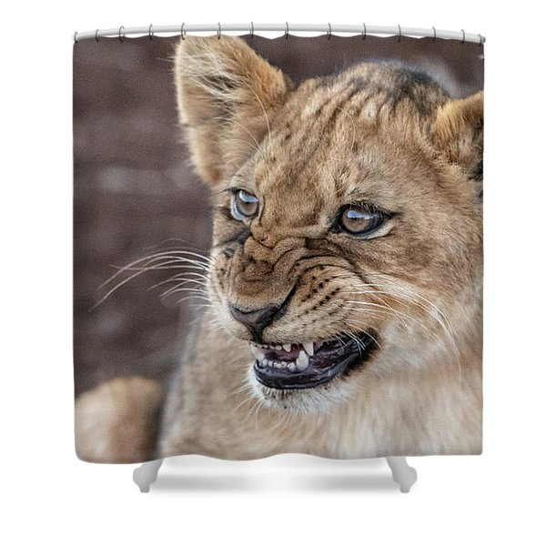 Irritated Lion Cub Shower Curtain