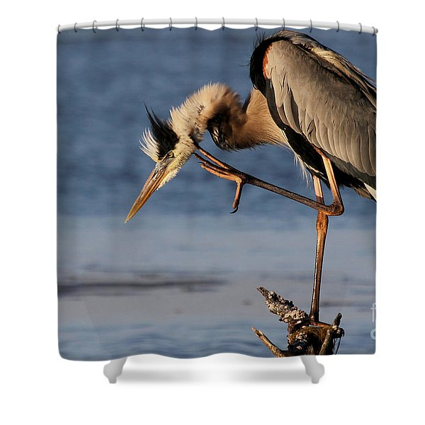 Itchy - Great Blue Heron Shower Curtain