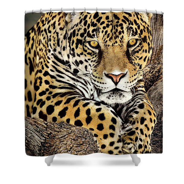 Jaguar Portrait Wildlife Rescue Shower Curtain