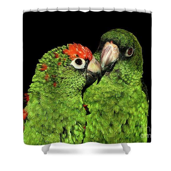 Jardine's Parrots Shower Curtain