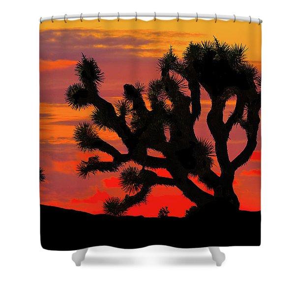 Joshua Tree At Sunset Shower Curtain