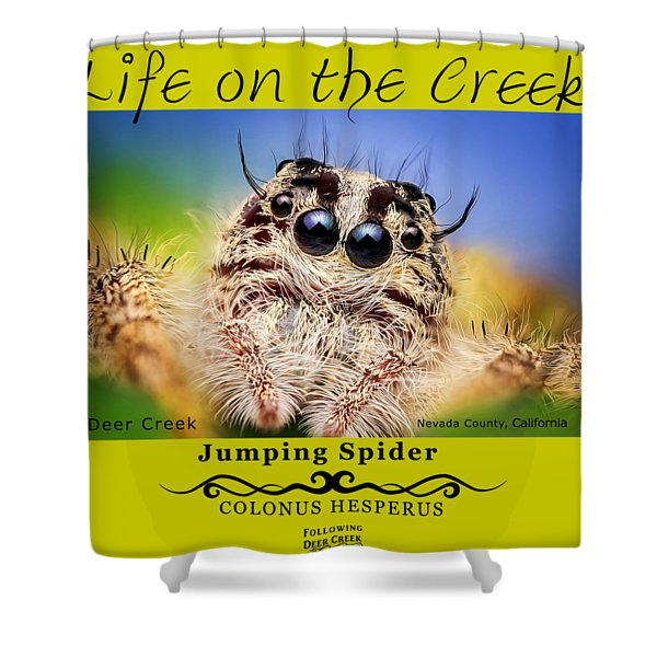 Jumping Spider Colonus Hesperus Shower Curtain