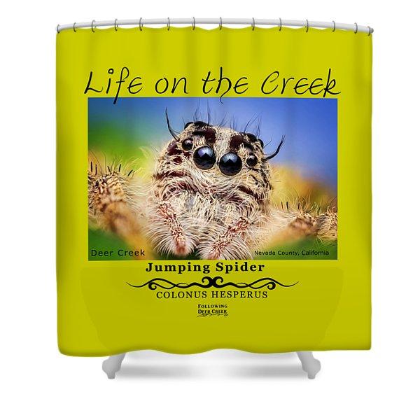 Jumping Spider Colonus Hesperus Shower Curtain
