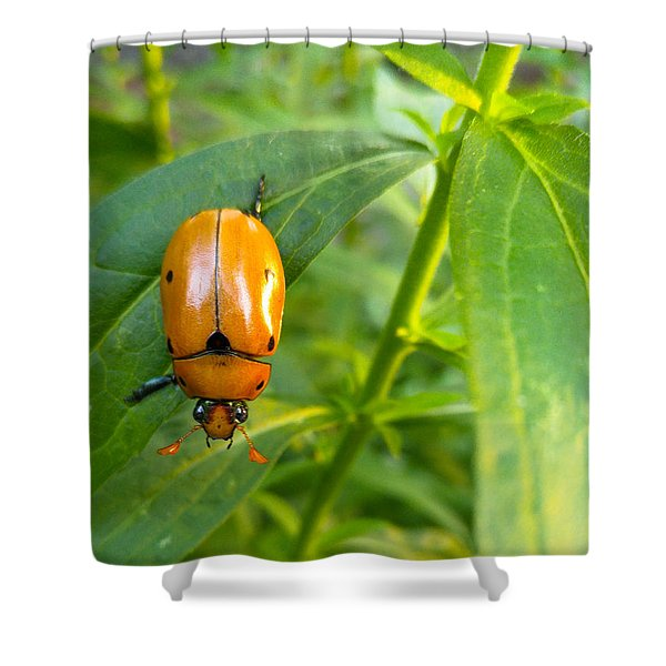 June Bug Shower Curtain
