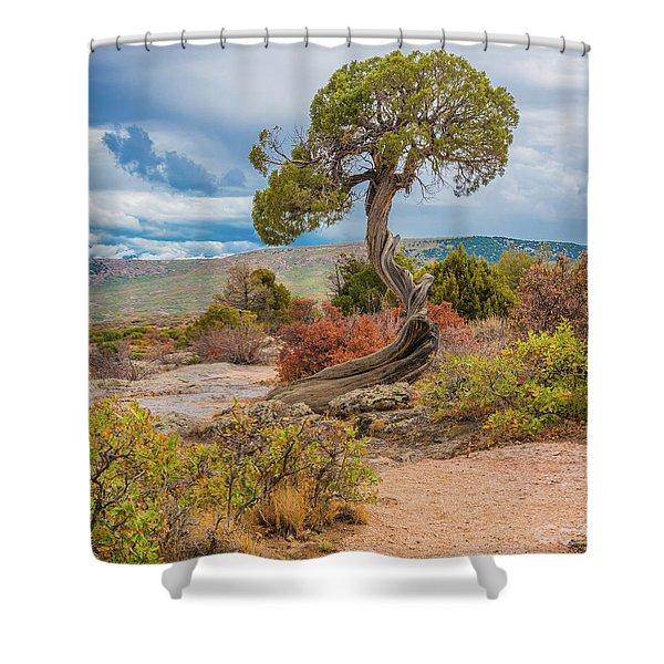 Juniper At Dragon Point Shower Curtain