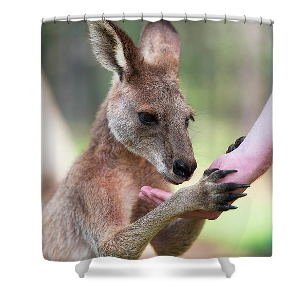 Shower Curtain featuring the photograph Kangaroo by Rob D Imagery