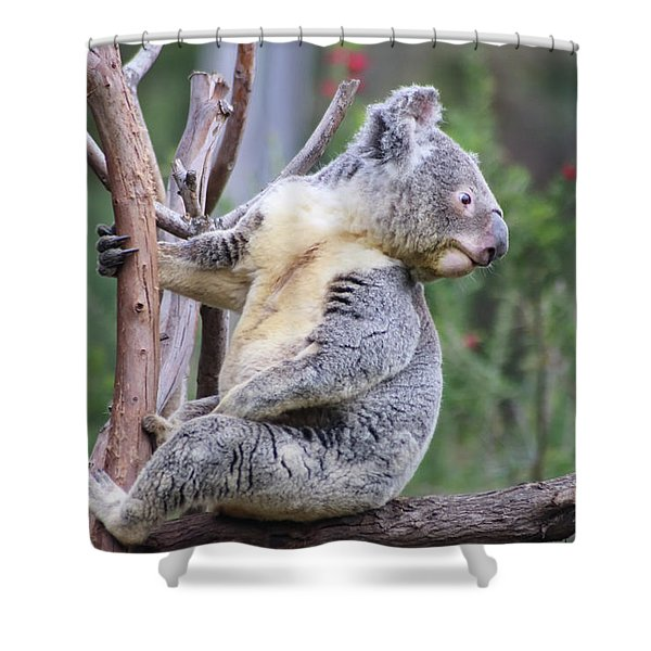 Shower Curtain featuring the photograph Koala In Tree by Dawn Richards
