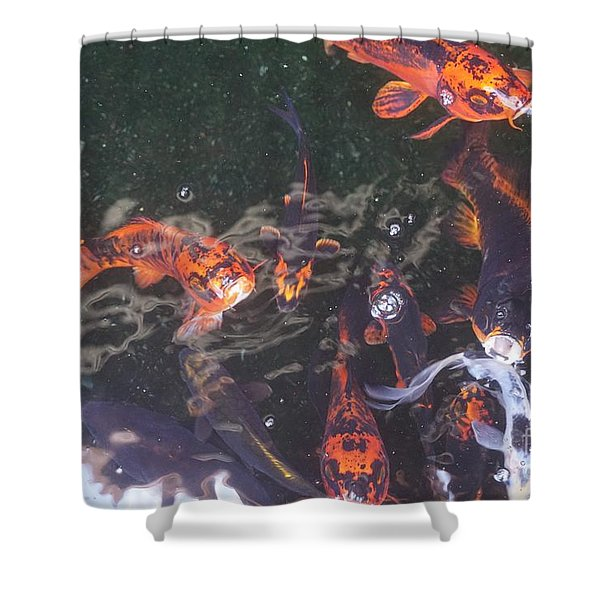 Koi In A Pond Shower Curtain