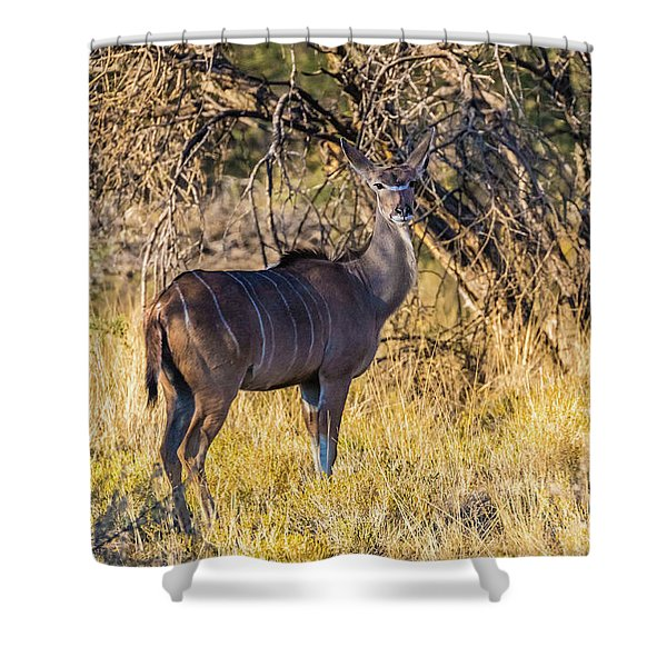 Kudu, Namibia Shower Curtain