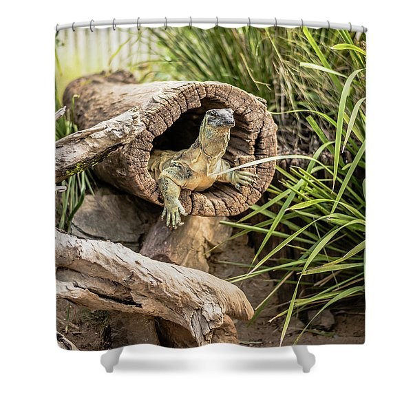 Lace Monitor During The Day. Shower Curtain