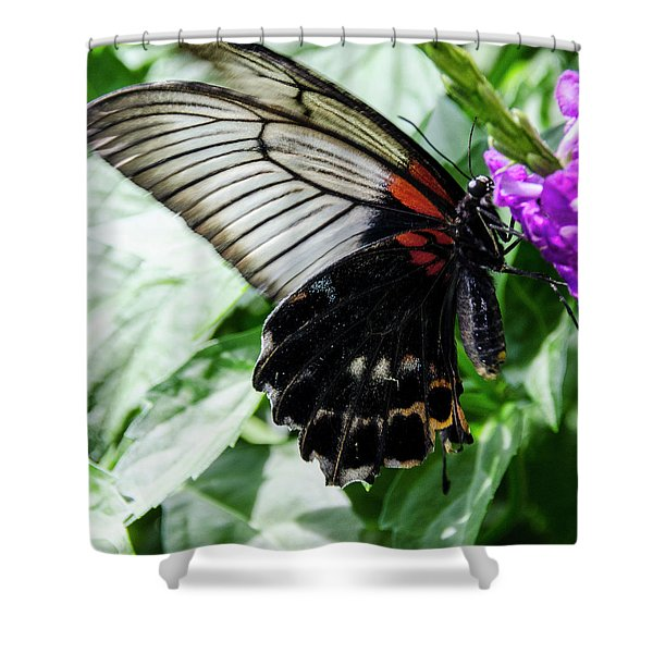 Lacey Elegance Shower Curtain