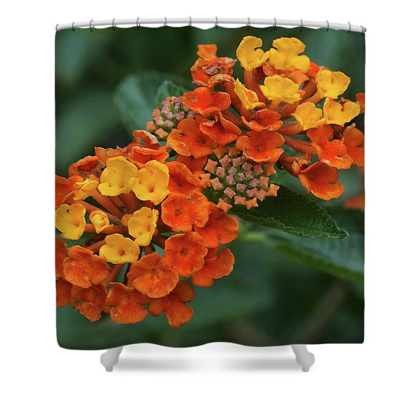 Lantana Cluster Shower Curtain