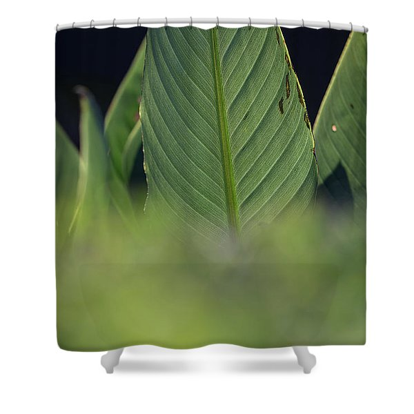 Large Dark Green Leaves Shower Curtain