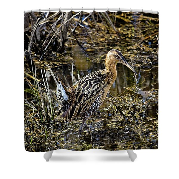 Largest North American Rail Shower Curtain