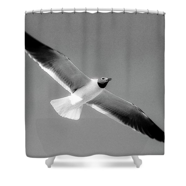 Laughing Seagull Shower Curtain