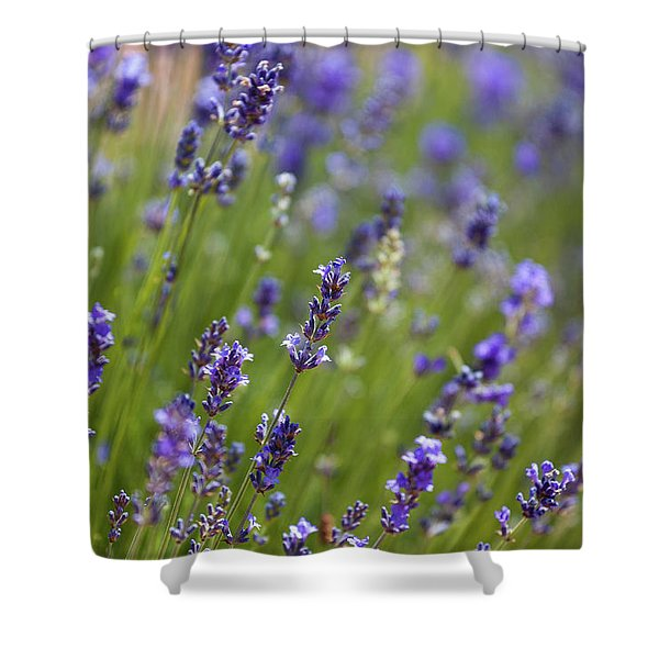 Lavendel  Shower Curtain