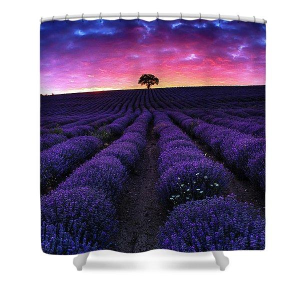 Lavender Dreams Shower Curtain