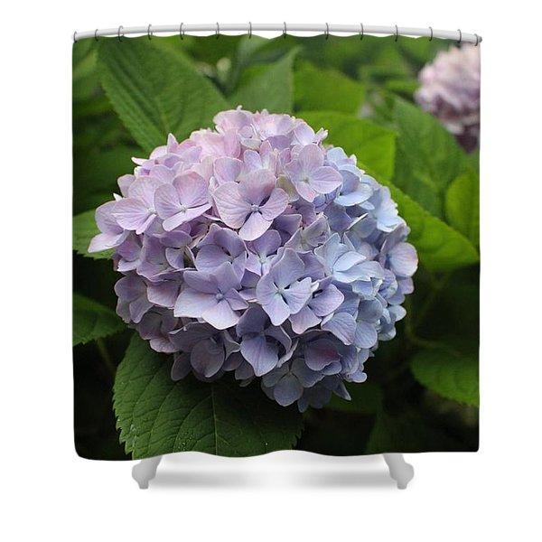Lavender Hydrangea, Cape May Shower Curtain