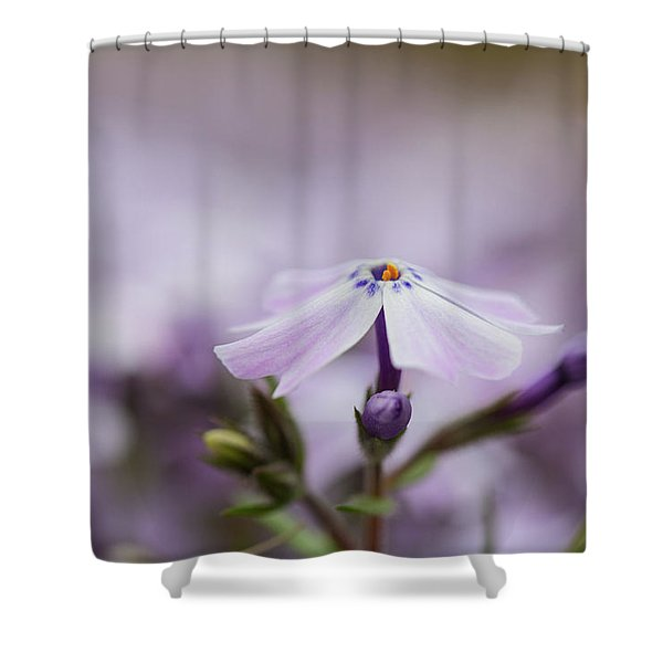 Shower Curtain featuring the photograph Lavender Reverie by Emily Johnson