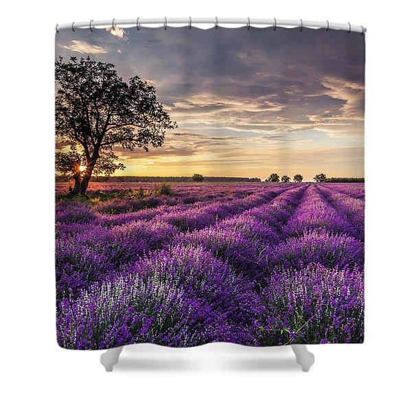 Lavender Sunrise Shower Curtain