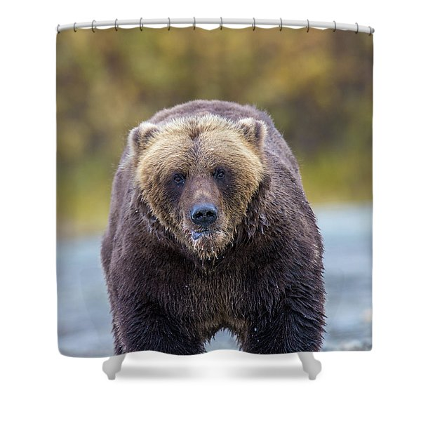 Lazy C Angry Bear  Shower Curtain