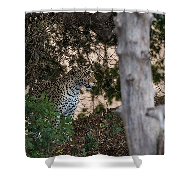 Shower Curtain featuring the photograph LC1 by Joshua Able's Wildlife