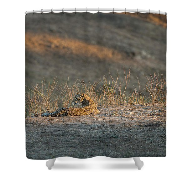 Shower Curtain featuring the photograph Lc10 by Joshua Able's Wildlife