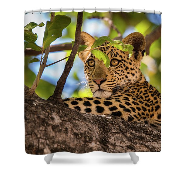 Shower Curtain featuring the photograph Lc11 by Joshua Able's Wildlife