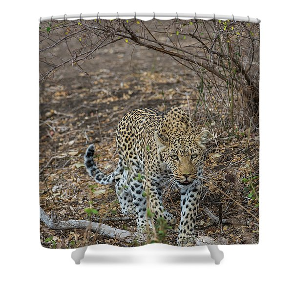 Shower Curtain featuring the photograph LC2 by Joshua Able's Wildlife