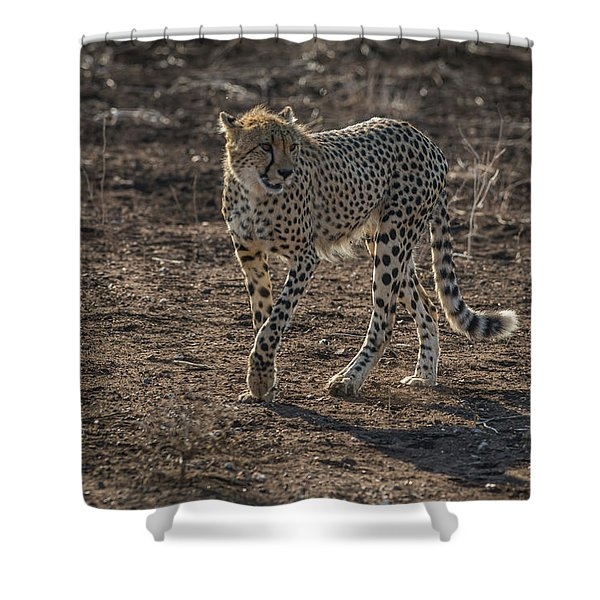 Shower Curtain featuring the photograph LC3 by Joshua Able's Wildlife