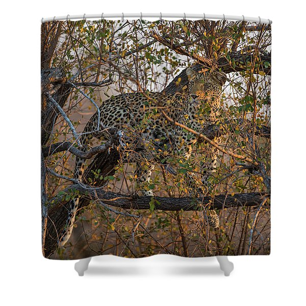 Shower Curtain featuring the photograph LC6 by Joshua Able's Wildlife