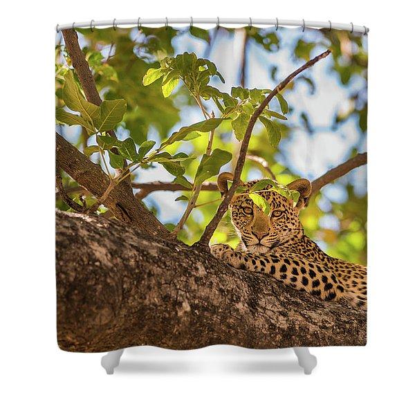 Shower Curtain featuring the photograph LC9 by Joshua Able's Wildlife