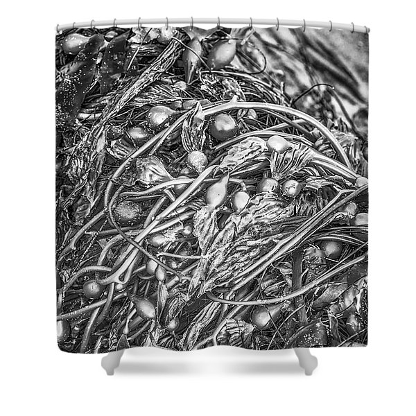 Left By The Sea #1 Shower Curtain