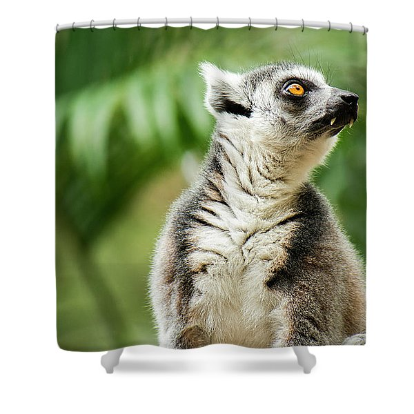 Shower Curtain featuring the photograph Lemur By Itself Amongst Nature. by Rob D Imagery