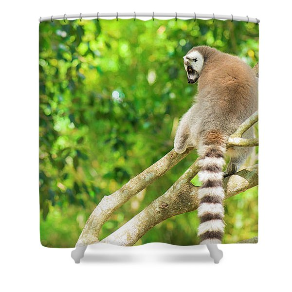 Lemur By Itself In A Tree During The Day. Shower Curtain