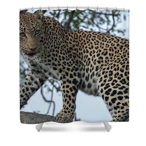 Leopard Anticipation Shower Curtain