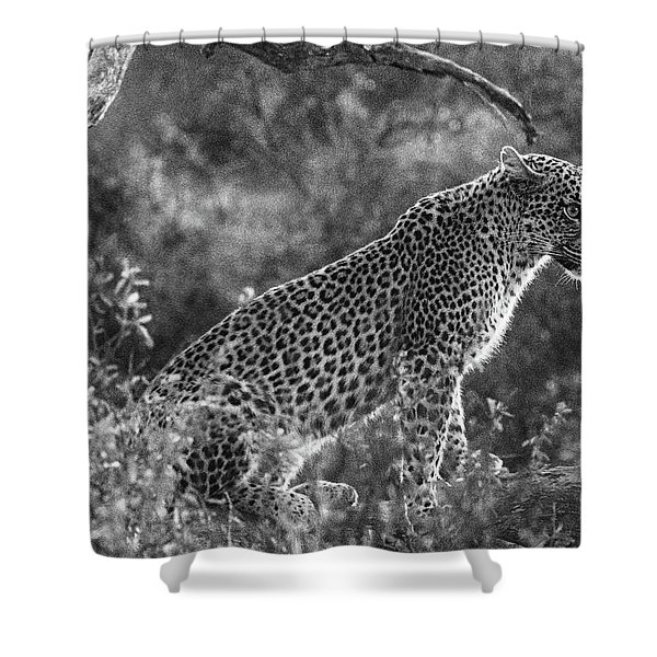 Leopard Sitting Black And White Shower Curtain