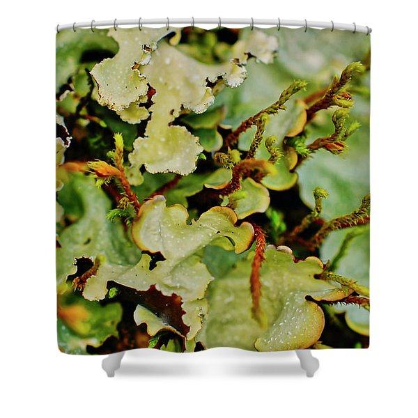 Shower Curtain featuring the photograph Lichen by Meta Gatschenberger